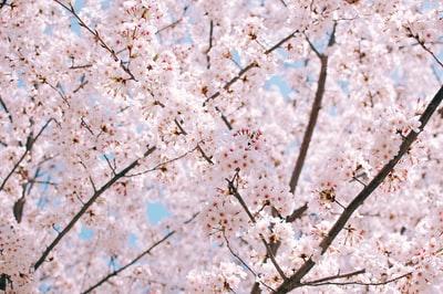 ドラゴン桜2【続編】のキャストも超豪華?あらすじ・内容も!